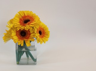 Bouquet of yellow Gerber daisies in clear glass vase with copy space on the right