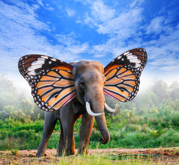 portrait of elephant with butterfly wings in forest