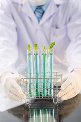 Growing GMO Plants