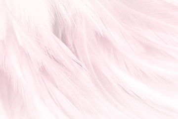 Pink feather textured background. Fototapete