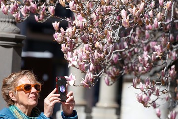 A woman photographs blossoms on a tree in Washington
