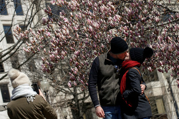 A couple kiss as they pose for a photo in front of a blossom tree in Washington