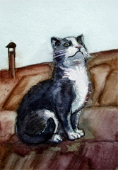 Cat in watercolor