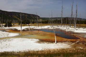 Dead trees in the Fountain Paint Pot area in Yellowstone National Park