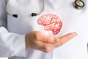Doctor's hand shows brain .
