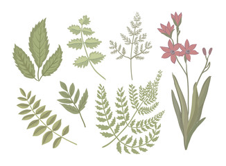 Botanical herbs and flowers. Vector print. Plants isolated on white background.