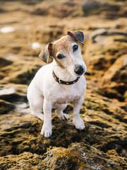 Adorable dog on stone