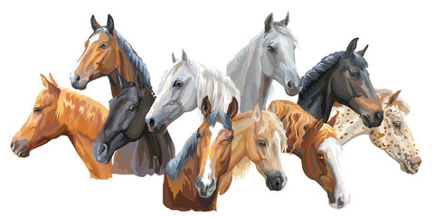 Set of horses breeds3