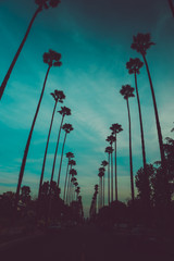 Line of palm trees with a teal sky