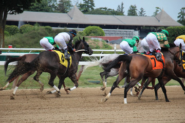 Horses and riders taking off from the gate at Saratoga Springs race course