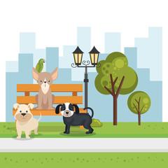 cute dogs in the park scene