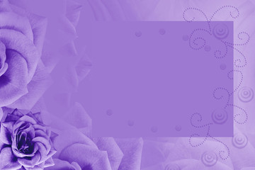 Floral violet background. Purple rose flower. Background for the postcard. Place for text. Nature.