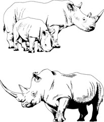 attacking big rhinoceros drawn by hand on a white background separated tattoo