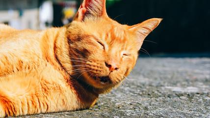 orange cat outdoors. sleep.