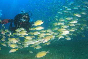 Female scuba diver underwater and fish
