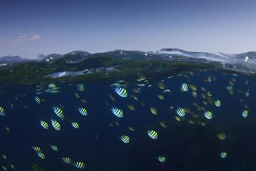 Fish in ocean half and half over under split photo