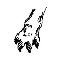 Hand drawn paw. Sketch, vector illustration.