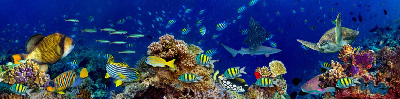 colorful wide underwater coral reef panorama banner background with many fishes turtle and marine life / Unterwasser Korallenriff breit Hintergrund