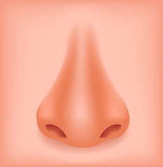 Human nose isolated on white background vector