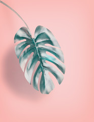 Wall Mural - Tropical hanging Monstera leaf at pastel pink background, summer background with copy space for design