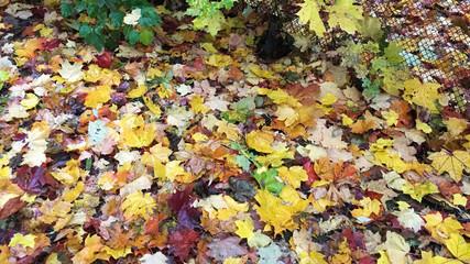 fon foliage