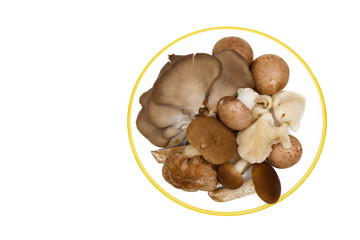 mix of edible mushrooms on a plate isolated on a white background.champignons,Pioppino,Pleurotus ostreatus,Shiitake.Top view.
