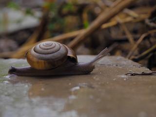 Snail in the near term