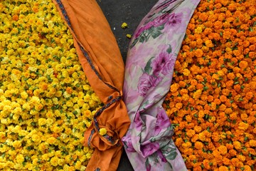 Bags of fresh picked orange and yellow flowers for market in Jaipur, Rajasthan, India.