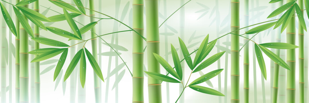 Horizontal background with green bamboo stems and leaves on white