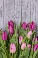 Pink tulips on a gray background. Free space