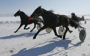 Trotters compete in a harness race near Krasnoyarsk