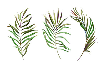 Tropical  leaves set. Vector illustration. Isolated image