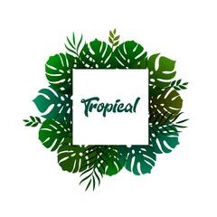 pattern tropical leaf