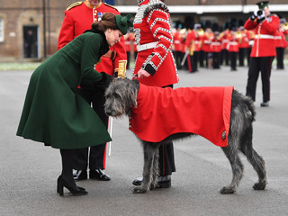 Britain's Catherine, Duchess of Cambridge attaches shamrock to the collar of mascot Irish Wolfhound Domhnall at the presentation of Shamrock to the 1st Battalion Irish Guards, at a St Patrick's Day parade at Cavalry Barracks in Hounslow, London