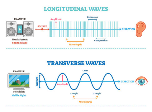 Longitudinal and Transverse wave type, vector illustration scientific diagram. Sonic and visual perception principle.