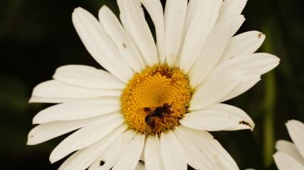 fiori in vita