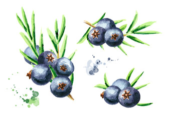 Juniper berries set. Watercolor hand drawn illustration, isolated on white background
