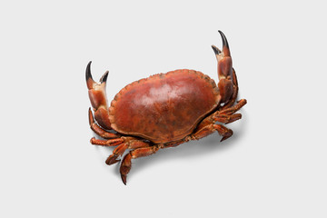 Crab food with white background