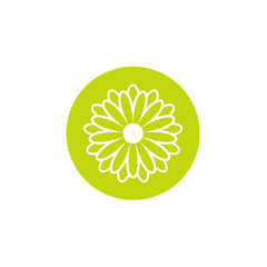 Green flat icon of chrysanthemum flower with white outline in green circle. Big Bloom with big oval petals