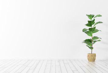 Interior background with plant 3d rendering Fototapete