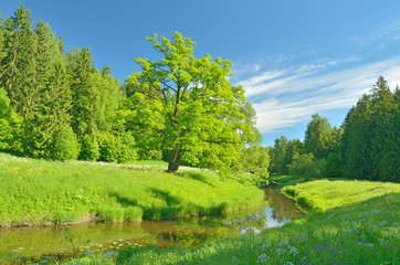 Foto op Canvas Lime groen Sunny landscape in the forest.
