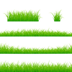 Grass Borders Set. Grass Plant Panorama. Vector illustration isolated on white background