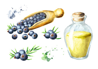 Juniper  set. Watercolor hand drawn illustration, isolated on white background