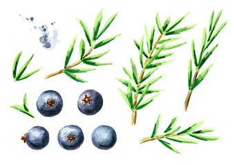Juniper elements set. Watercolor hand drawn illustration, isolated on white background