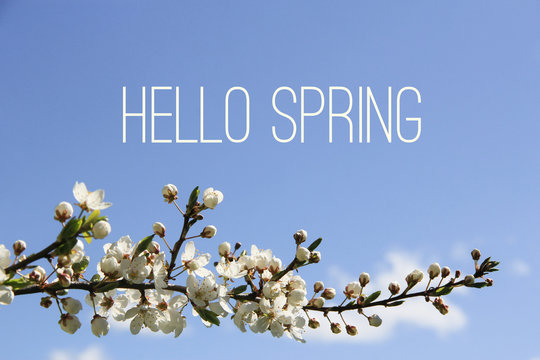 Hello Spring text and blossoming tree branch on blue sky background. Spring equinox concept.