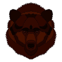 Illustration of a bear s head. Vector graphics. Hand drawing