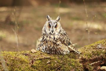 owl sitting on a stump