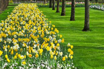 A tulipa é uma flor ornamental do género de plantas liliáceas, formadas por uma única flor em cada haste