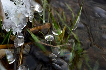Ice on the plants in the river in winter