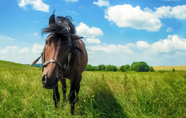 Portrait funny horse, looking and camera in beautiful bright summer colorful landscape background